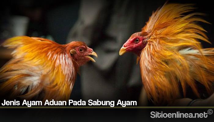 Jenis Ayam Aduan Pada Sabung Ayam