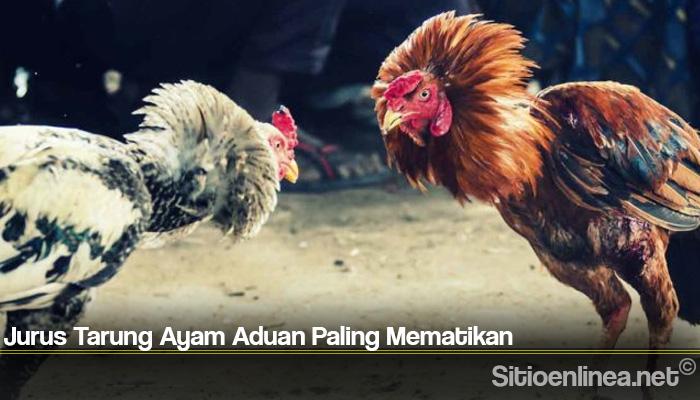 Jurus Tarung Ayam Aduan Paling Mematikan